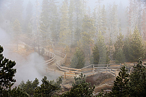 Misty Forest  Yellowstone National Park Stock Image - Image: 14945831