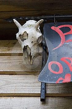 Old Animal Skull Stock Image - Image: 14949401