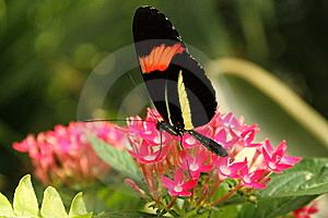 Colorful Butterfly Royalty Free Stock Photography - Image: 14955407