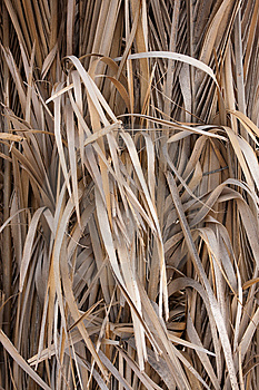 Dry Grass Stock Image - Image: 14957681