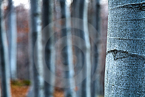 Beech- Wood, Abstract Composition Stock Image - Image: 14963821