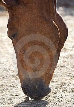 Muzzle Royalty Free Stock Image - Image: 14963996