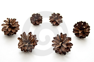 Fir Cone Royalty Free Stock Image - Image: 14964666