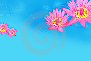 Water Lily Stock Image - Image: 14964791