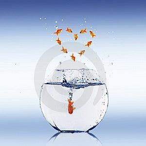 Goldfish Jump Royalty Free Stock Image - Image: 14967356