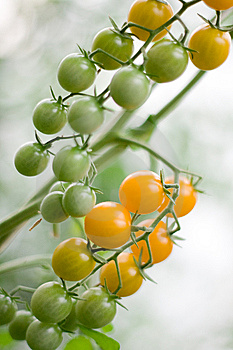 Cherry Tomatoes On A Brunch Stock Photography - Image: 14984902