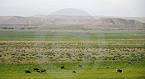 The Grassland In Sinkiang Royalty Free Stock Photo - Image: 14986245
