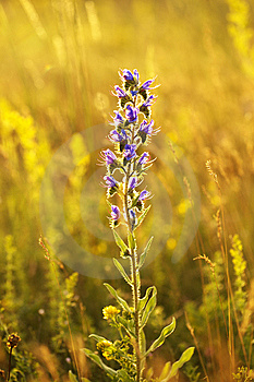 Flower In The Sunset Stock Photos - Image: 14987143