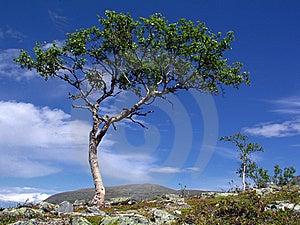 Wild Landscape Royalty Free Stock Image - Image: 14988366