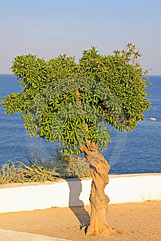 Coastal Tree Stock Images - Image: 14989024