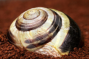 Snail Shell Stock Image - Image: 14990161
