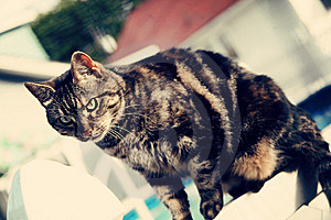 Tabby On A Fence Royalty Free Stock Photo - Image: 14993195