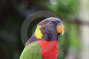 Parrot 2 Stock Photos