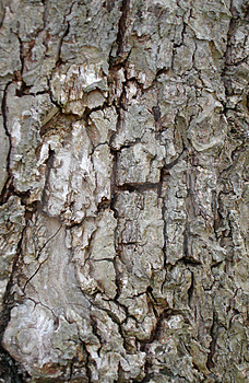 Close Up Of Tree Bark Free Stock Photos