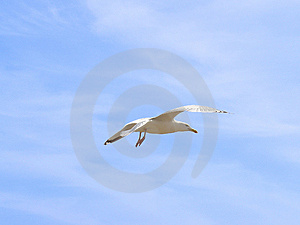 Mouette Images stock