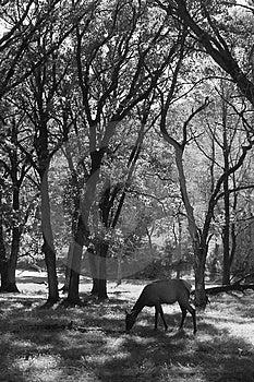 Herten die Gras eten Stock Foto