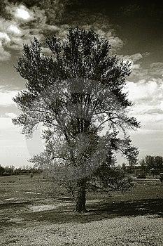 Lonely Tree Free Stock Photo