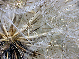 Puffball Closeup Stock Photo
