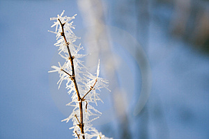 Frozen Branch Stock Photos - Image: 1506523