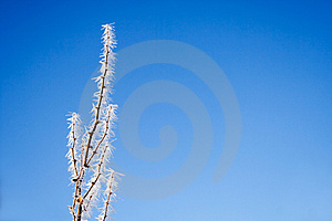 Frozen Branch Royalty Free Stock Image - Image: 1506526