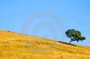 Alone Tree Stock Photos - Image: 1506593