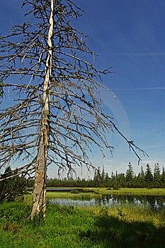 Moor Lake  Royalty Free Stock Photography - Image: 15000657