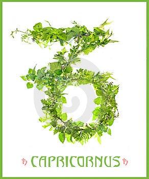 Constellation Capricornus Royalty Free Stock Image - Image: 15000996