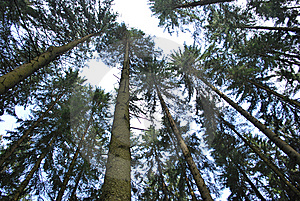 Tree Canopy Stock Photo - Image: 15005080