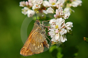 Butterfly Royalty Free Stock Photography - Image: 15007577