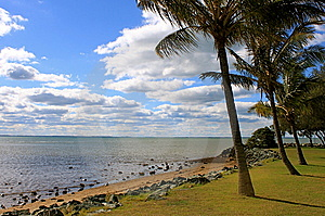 Palm Trees Line The Beach Royalty Free Stock Image - Image: 15010036