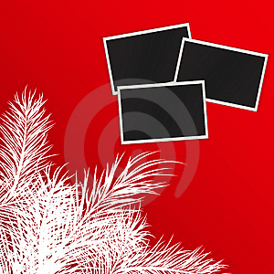 Photos Against Pine Branches Stock Image - Image: 15011751