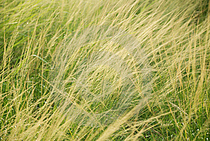 Green Grass Stock Photo - Image: 15014290
