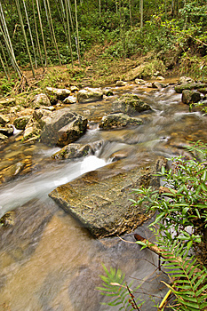 Rock With Stream Stock Photo - Image: 15018050