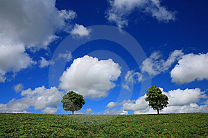 Green Fields, The Blue Sky And Trees Royalty Free Stock Photos - Image: 15020118