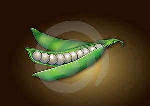 Pearl Pee Pod Idea Stock Images - Image: 15020414