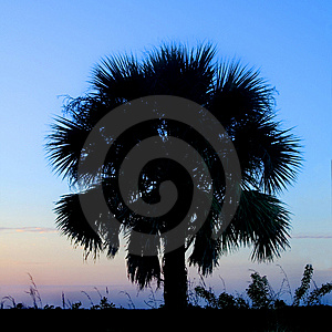 Palm Tree Silhouette Stock Images - Image: 15020864