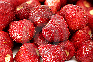 Fresh Wild Strawberries Stock Photography - Image: 15032132