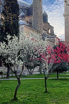 Selimiye Mosque Stock Photo - Image: 15032830
