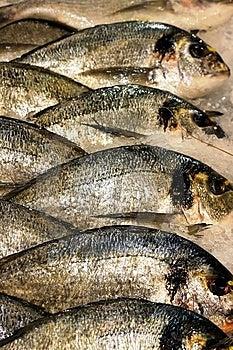 Fishes Stock Photo - Image: 15033040