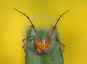 Spider Royalty Free Stock Photography - Image: 15035487