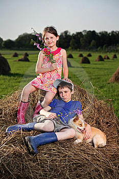 Hay Stock Photos - Image: 15038073