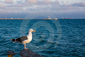 Seagull At Sunset Stock Image - Image: 15040901