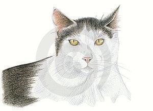 Cat Royalty Free Stock Image - Image: 15041876