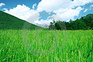 Green Grass, Mountains And Forest Below Clouds. Royalty Free Stock Photography - Image: 15045607