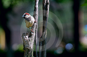 Sparrow Stock Photography - Image: 15052592