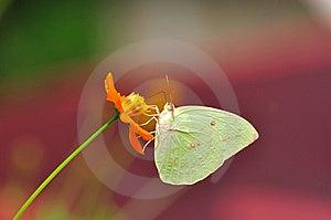 Royal Flora Stock Photo - Image: 15057360
