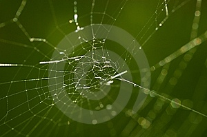 Spinnenweb Stockbilder - Bild: 15059324