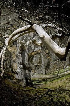 Magic Tree Royalty Free Stock Photography - Image: 15062807