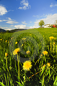 Yellow Hilly Flowers Stock Photography - Image: 15064652