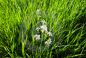 Grass And Flowers Royalty Free Stock Photos - Image: 15064728